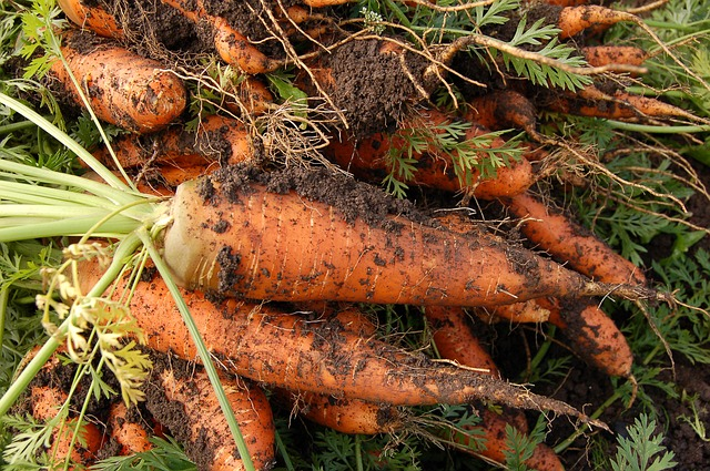 How to grow carrots from tops easily