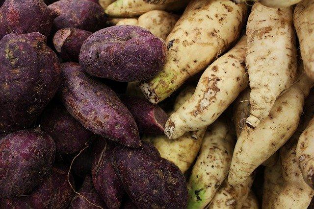 How to grow sweet potato