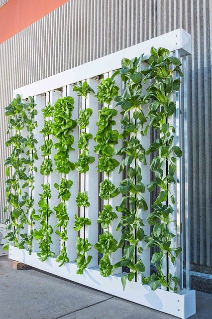 What is vertical farming and how it works