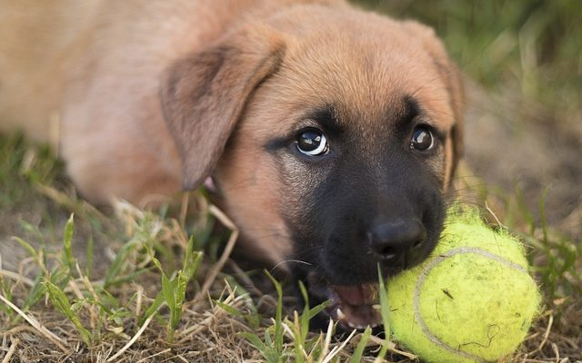 How to stop dog destructive chew