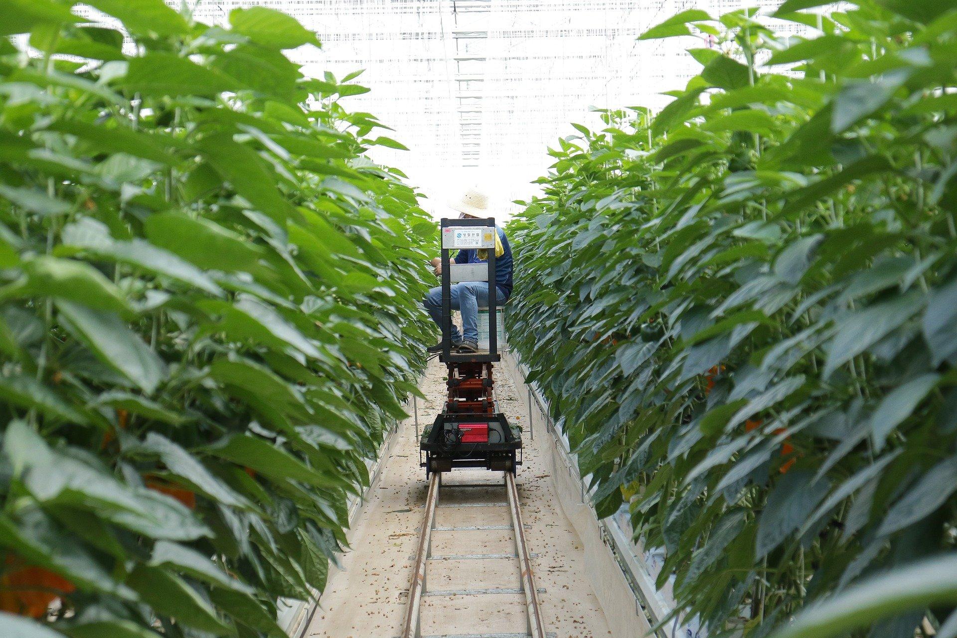 How iot tech help in smart farming