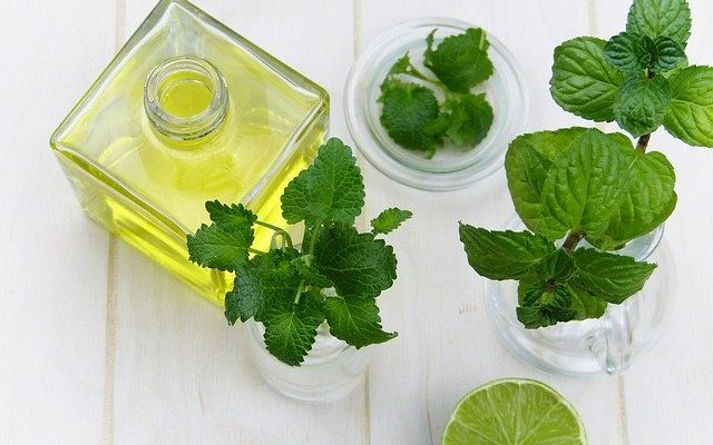 Benefits of peppermint oil in treating skin problems in pets