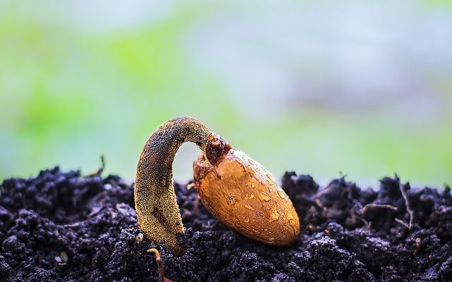 How to make your seeds to grow quickly from the soil
