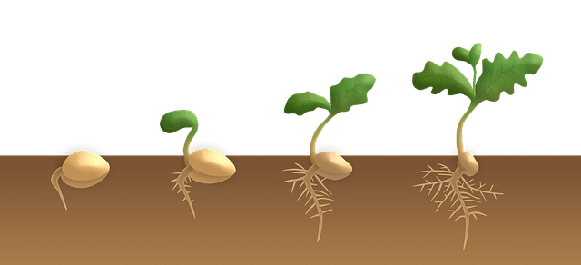 Important factors necessary for seed germination