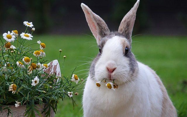 feeding rabbits with green fodder farmpally