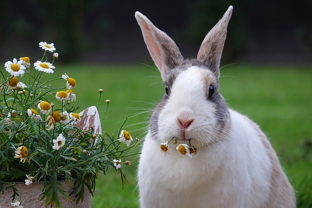 Reasons to give green fodder to rabbits