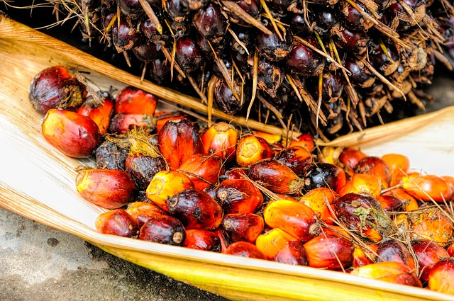 Oil palm fruits and their uses