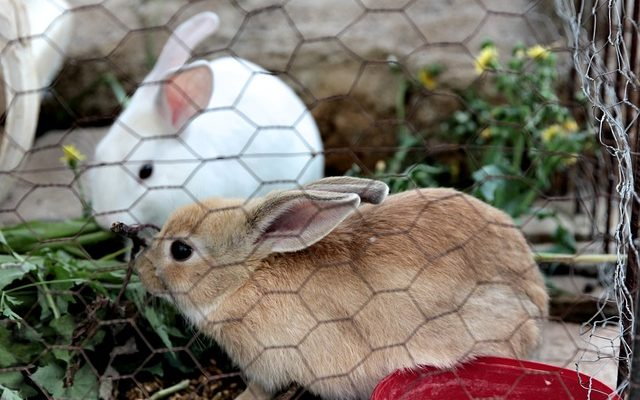 How to care for baby bunnies