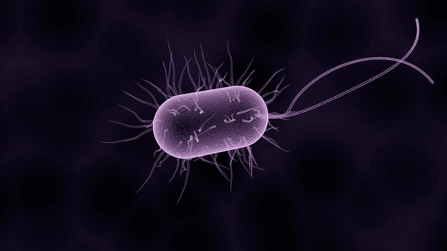 Factors affecting soil bacteria population